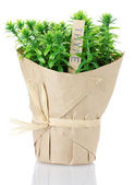 Thyme herb plant in pot with beautiful paper decor isolated on white — Stock Photo