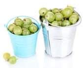 Green gooseberry in metal buckets isolated on white — Stock Photo