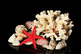 Sea coral with shells isolated on black — Stock Photo