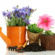 Watering can,  tools and plants in flowerpot isolated on white - Foto Stock