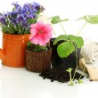 Watering can and plants in flowerpot isolated on white — Foto Stock