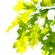 Maple leaves in park - Photo