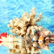 Sea coral with shells on water background close-up - Stock Photo
