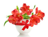 Alstroemeria red flowers in vase isolated on white — Stock Photo