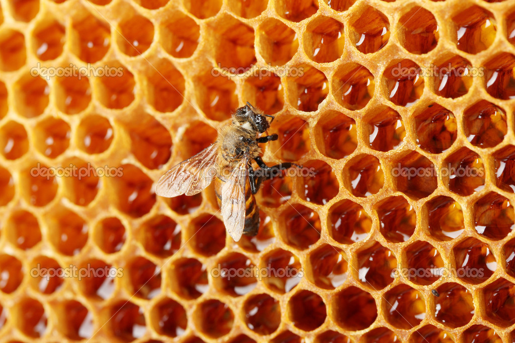 Yellow beautiful honeycomb with honey and bee, background — Stock Photo #11941901