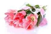 Beautiful pink tulips isolated on white — Stock Photo
