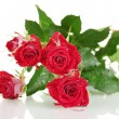 Постер, плакат: Beautiful vinous roses on white background close up