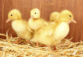 Many duckling on straw on wooden background — Stock Photo