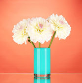 Beautiful white dahlias in blue vase on red background close-up — Stock Photo