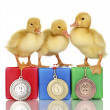 Three duckling on championship podium isolated on white — Foto de stock #12089978