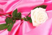 Beautiful rose on pink cloth — Stock Photo