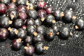 Fresh black currant on black background close-up — Stock Photo