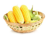 Fresh corn cobs in basket isolated on white — Stock Photo