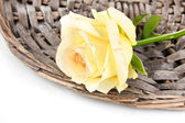Beautiful rose on wicker mat isolated on white — Stock Photo