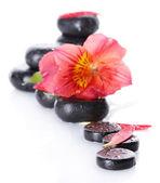 Piedras spa con gotas, flor roja y pétalos aislados en blanco — Stockfoto