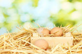 Brown eggs in a wooden box on straw on green background — Stock Photo