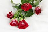Beautiful vinous roses on white chiffon close-up — Stock Photo