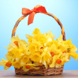 Beautiful yellow daffodils in basket with bow on wooden table on blue background — Stock Photo