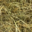 Golden hay texture background close-up — Stock Photo #12131712