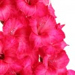 Beautiful bouquet of pink gladioluses, isolated on white — Stock Photo