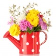 Red watering cwith white polka-dot with flowers isolated on white — Stock Photo #12132380