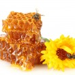 Stock Photo: Sweet honeycomb with honey, bee and flower, isolated on white