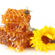 Sweet honeycomb with honey, bee and flower, isolated on white — Stock Photo