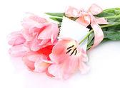Belle tulipani rosa isolati su bianco — Foto Stock