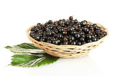 Fresh black currant in wicker basket isolated on white — Stock Photo