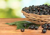 Fresh black currant in wicker basket on green background close-up — Stock Photo