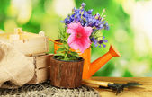 Watering can, tools and flowers on wooden table on green background — 图库照片