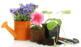 Watering can, tools and plants in flowerpot isolated on white — Stock Photo