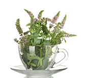 Fresh mint with flowers in cup, isolated on white — Stock Photo