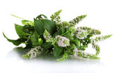 Fresh mint with flowers, isolated on white — Stock Photo