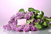 Beautiful lilac flowers on purple background — Stock Photo