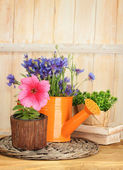 Watering can and plants in flowerpots on wooden background — Stock Photo