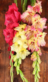Beautiful colorful gladiolus on wooden background close-up — Stock Photo