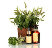 Essential oil and mint isolated on white — Stock Photo