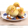 Stock Photo: Duckling and table setting isolated on white