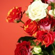 Bouquet of beautiful roses on red background close-up — Stock Photo #12182567