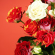 Bouquet of beautiful roses on red background close-up — Stock Photo