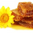Sweet honeycombs with honey and sunflower, isolated on white — Foto Stock