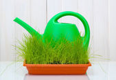 Green grass in a flowerpot and watering can on white wooden background — Stock Photo