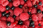 Ripe berries, close up — Stock Photo