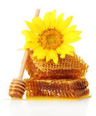 Sweet honeycombs with honey, wooden drizzler and sunflower, isolated on white — Stock Photo