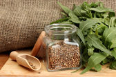 Jar of coriander seeds with rocket on canvas background close-up — Foto Stock