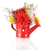 Red watering can with white polka-dot with flowers isolated on white — Stock Photo