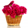 Beautiful pink peonies in basket with bow isolated on white - Stock Photo