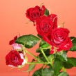 Beautiful vinous roses on red background close-up - Stock Photo