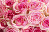 Beautiful bouquet of pink roses, close up — Stock Photo